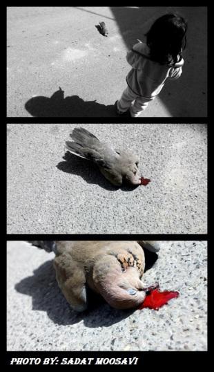 آیات القرمزی...پرنده ی صلح کشته شده!