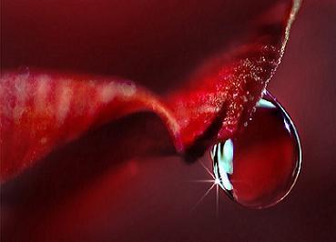 اشک نیلوفر,شعر عاشقانه,دلنوشته