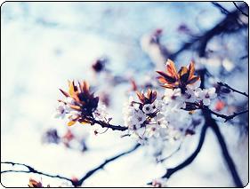 فصل بهار ایران،شکوفه در بهار،شعر عاشقانه بهاری