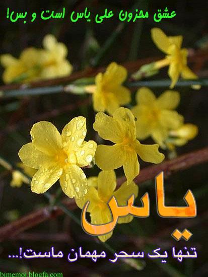 گلهای یاس - به روز رسانی :  9:27 ص 94/6/2 عنوان آخرین نوشته : تو رها در من و من محو سراپای توام