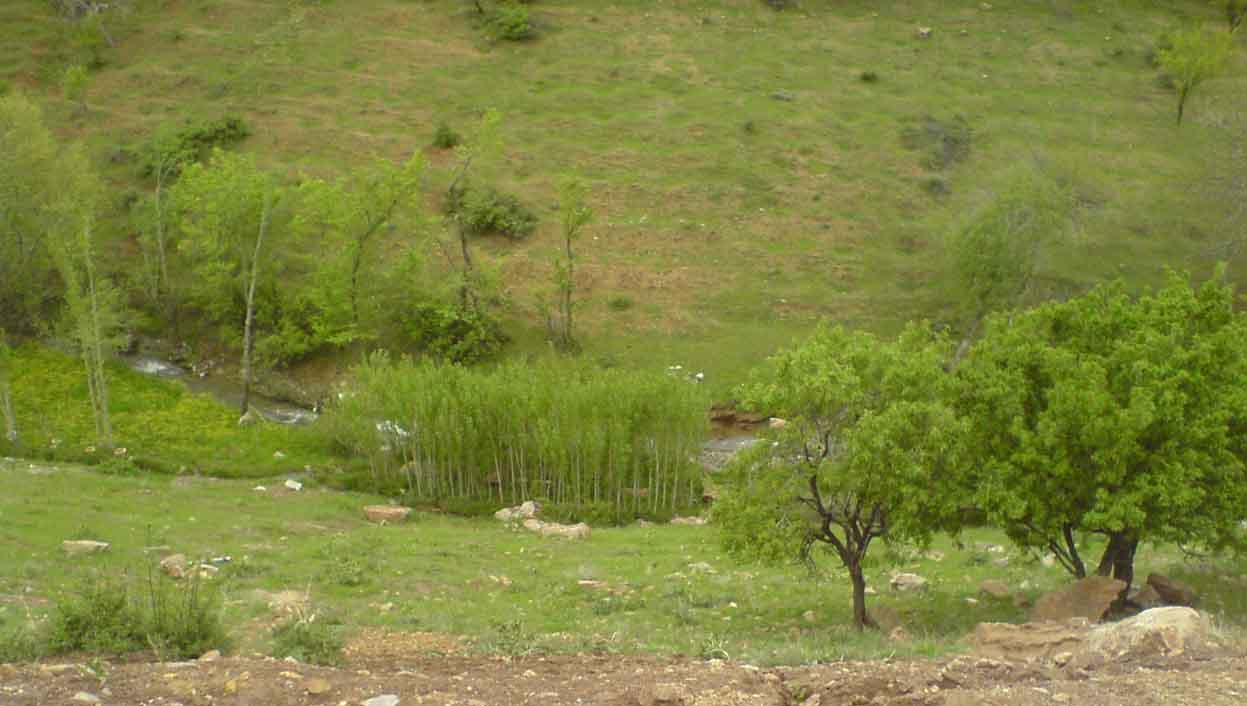 باغ دره