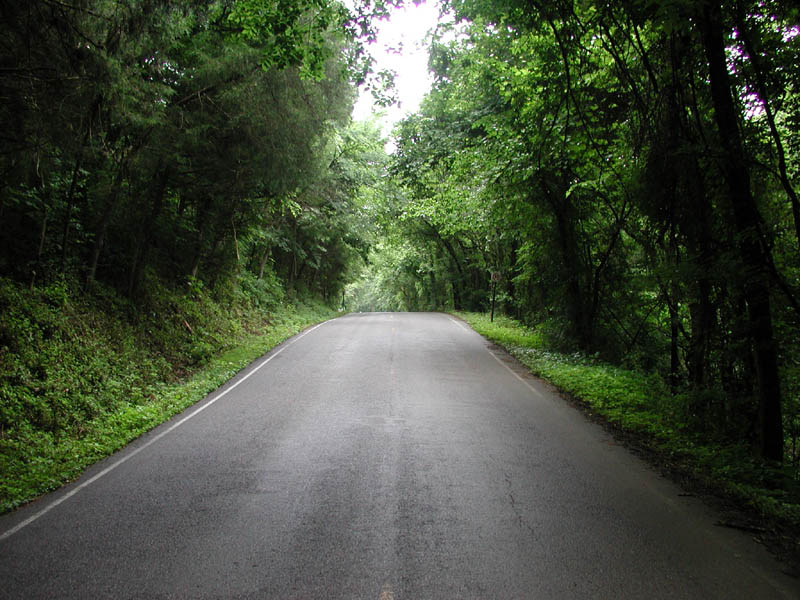 مسیر سبز - به روز رسانی :  11:1 ع 92/8/11 عنوان آخرین نوشته : شما امروز چگونه امام حسین (ع)رایاری و کمک میکنید؟