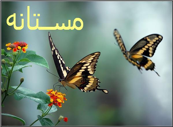 مستانه - به روز رسانی :  1:13 ع 95/11/4 عنوان آخرین نوشته : حرف دل