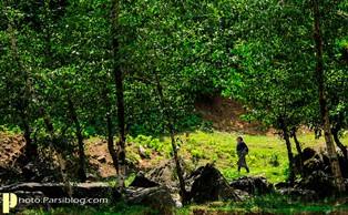 زن روستایی ماسوله