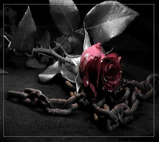 http://www.parsiblog.com/PhotoAlbum/asemane261/lovenice(2).jpg