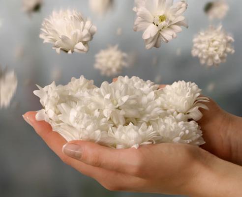 خدواند برکت هر چیز را در نکته ای قررار داده است