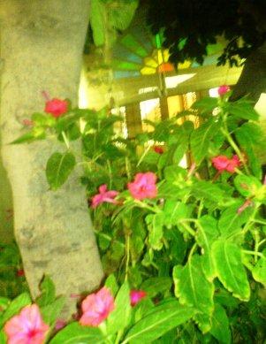 نمایی از حیاط ما