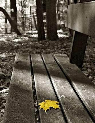 شاخه را محکم گرفتن...