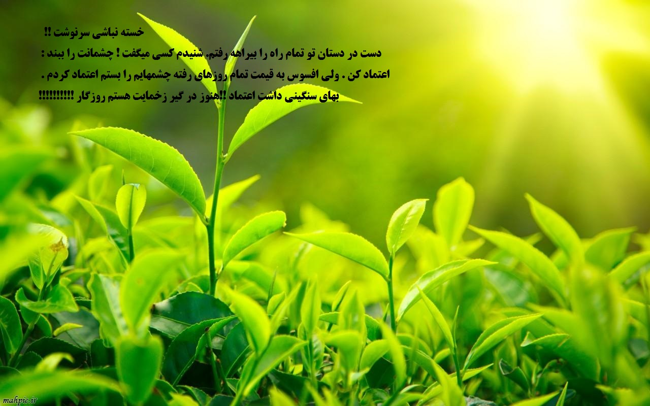 http://www.parsiblog.com/PhotoAlbum/khani73/8c207bfadc07a2b4087e31c364b49dc0.jpg