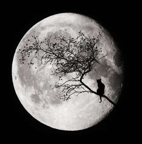 آرمسترانگ ماه