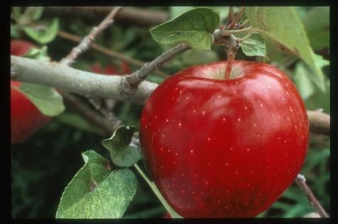 [تصویر: apple.jpg]
