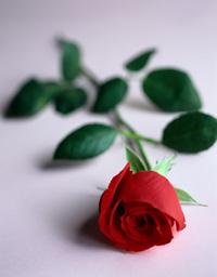 گناه نکردن واسه خدا مثل گل دادن به اونه
