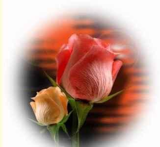 شاخ گلی برای شما