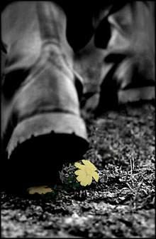 حرف چاه - به روز رسانی :  11:4 ص 87/3/17 عنوان آخرین نوشته : تسلیت