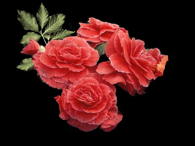 کیمیای سعادت - به روز رسانی :  3:4 ع 91/4/13 عنوان آخرین نوشته : خانه دوست کجاست؟